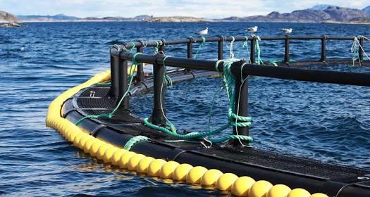 鱼, 对虾和贝类养殖