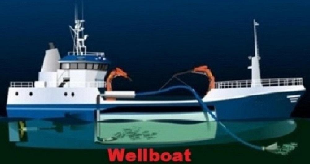 Wellboats