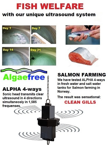 ALGAEFREE is the reference company for ultrasound Industry and represent the best technology the world allows. We are the genuine, qualified, professional and warm team which gives our customer excellent service. Our13 years with testing, 经验和出色的参考资料是您的安全和保证. 我们设计并解决您所有的藻类问题, bio film and bacteria wherever needed. 我们满足了世界各地的客户!